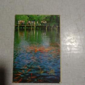 西湖   (三)    明信片     1套10张