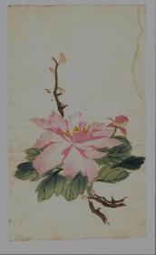 民国木版水印花笺纸:多色套印花卉笺(1)