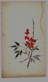 民国木版水印花笺纸:多色套印花卉笺(3)