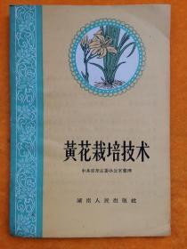 黄花栽培技术