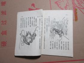 空中旅行的青蛙  3098