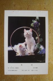 猫    年历年画缩样散页    32开1页