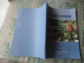 舟山市鸟类图集