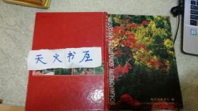 跨世纪的四川林业(中英文)(大16开 硬精装)  品相如图