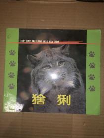 猞猁 北美洲猫科动物