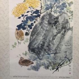 菊石双鹑 Ammonite