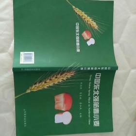 中国东北强筋春小麦