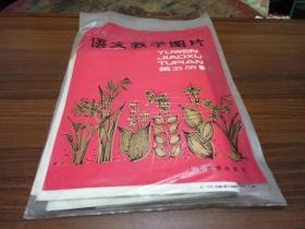 五年制小学课本---语文教学图片----第五册【1---6】张全