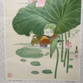 荷阴 Lotus