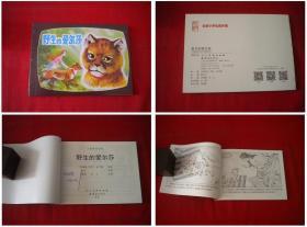 《野生的爱尔莎》,50开肖立画,人美2015.11出版10品,5274号,连环画