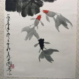 莲花金鱼 Lotus goldfish