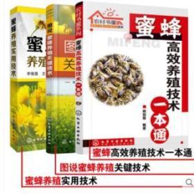 养蜂书籍 蜜蜂高效养殖技术 一本通+实用技术+关键技术 全套3共册 养蜂技术 蜜蜂养殖技术大全书籍 中蜂养殖技术实用