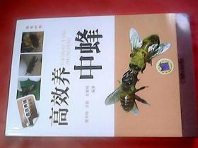 高效养中蜂