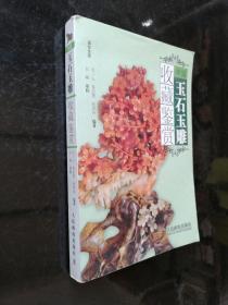 中国玉石玉雕收藏鉴赏