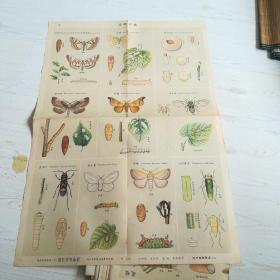 生产知识挂图:农作物害虫组,动物组共9张合售【戈湘岚编绘2开大】大中国图片出版社50-60年代出版【整体9品左右】