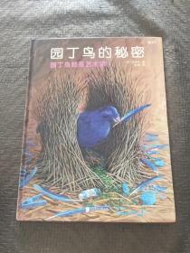 园丁鸟的秘密:园丁鸟都是艺术家