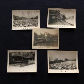 六十年代 杭州西湖景点老照片(玉泉 放鹤桥 里西湖 断桥 西山公园长林)5张