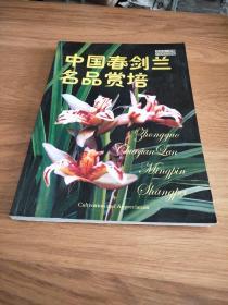 中国春剑兰名品赏培