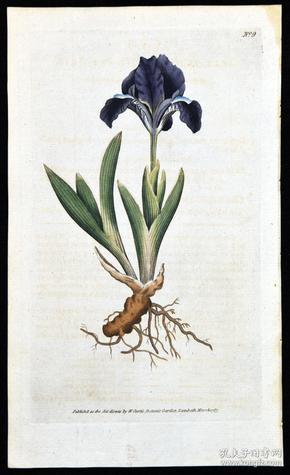 稀有1787年精美英国铜版画-柯蒂斯植物9号-矮百合,手工布纹纸,手工上色