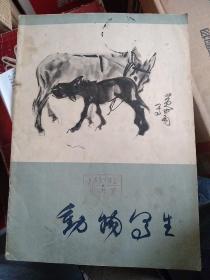 动物写生 黄胄,黄胄大师的动物写生姿态生动,笔法洗练,能准确地表现对象的行、神。 这里选印了他十余种动物的速写和墨写生,供研究参考。