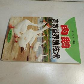 肉鹅高效益养殖技术