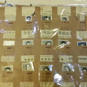 1956年至1957年云南财经学校学生个人存档照片350张左右合售