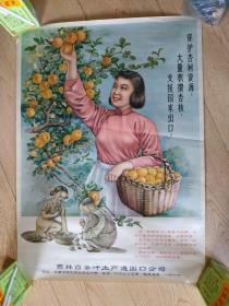保护杏树资源支援国家出口