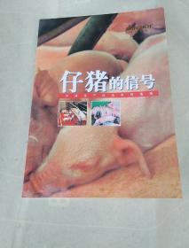 仔猪的信号           117-3