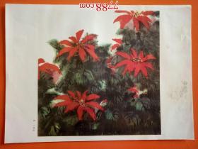 一品红(册页26*35cm)折叠寄送