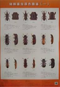储粮害虫原色图鉴(套装共8张)