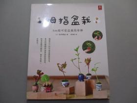 拇指盆栽:3cm超可爱盆栽简单种