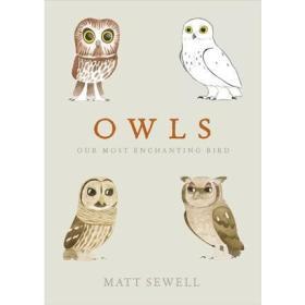 猫头鹰   Owls