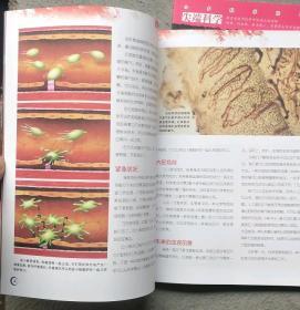 小多人文科学阅读系列 生命价值 (全套共24册合售)