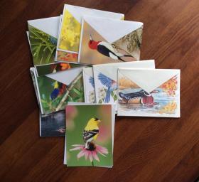 风景 (四张) 鸟类 (十六张)