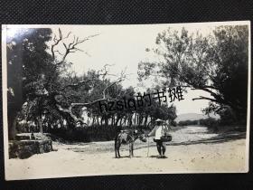 【民俗风情照片】民国早期秦皇岛或威海乡间小路上牵着毛驴的农民、左下角古树边有一孩童,影像清晰、保存完好