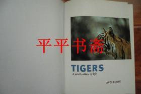 """TIGERS《老虎》(大16开精装画册""""英文原版""""铜版彩印 缺书衣)"""