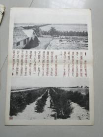 民国时期宣传画宣传图片一张(编号23)