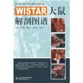 保证正版 WISTAR大鼠解剖图谱 王增涛 等 山东科学技术出版社