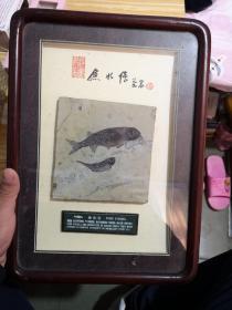 鱼化石           卖家保真
