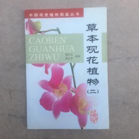 草本观花植物2