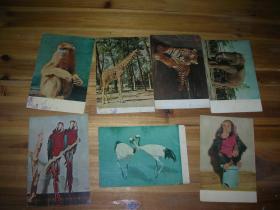 1959年左右明信片:北京动物园( 存7枚) 北京出版社
