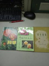 月季,菊花,中国十大名花,花卉栽培(4本和售)