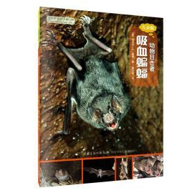 动物目击者:吸血蝙蝠(儿童版)