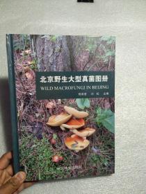 北京野生大型真菌图册