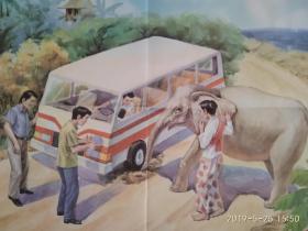 小学语文课本第五册教学挂图 课文《曼谷的小象》