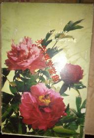 明信片 洛阳 1977年8张