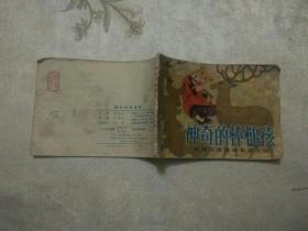 神奇的棒槌孩<达翰尔族民间故事之四>