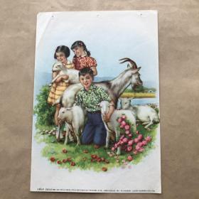 年画:可爱的羊,16开,李慕白绘,上海画片出版社1954年新1版1955年3印
