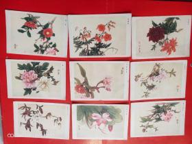 花卉图片-田世光作 9张 无护套