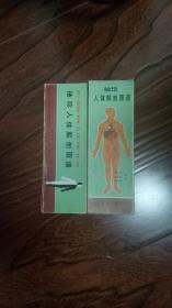 袖珍人体解剖图谱